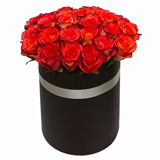 25 red rose in Box